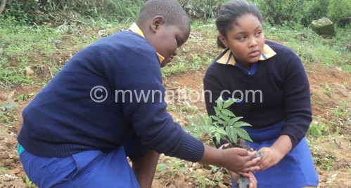 Even school girls have been planting trees