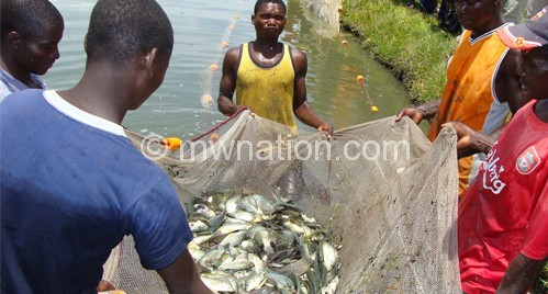 Malawi fishermen | The Nation Online