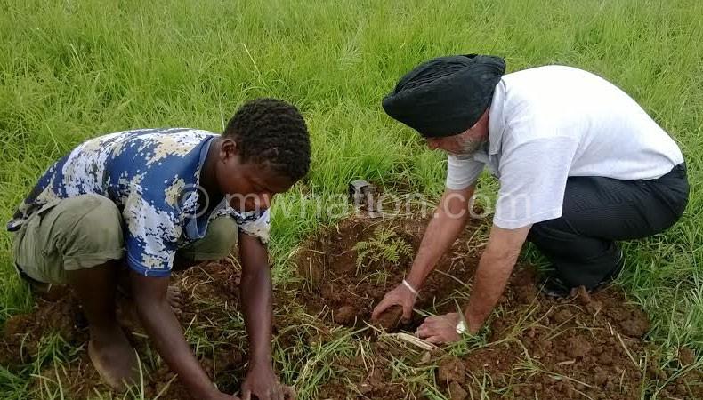 Communities plant trees