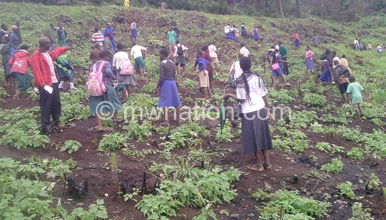 School tree planting | The Nation Online
