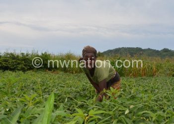 Thomas small holder farmer | The Nation Online