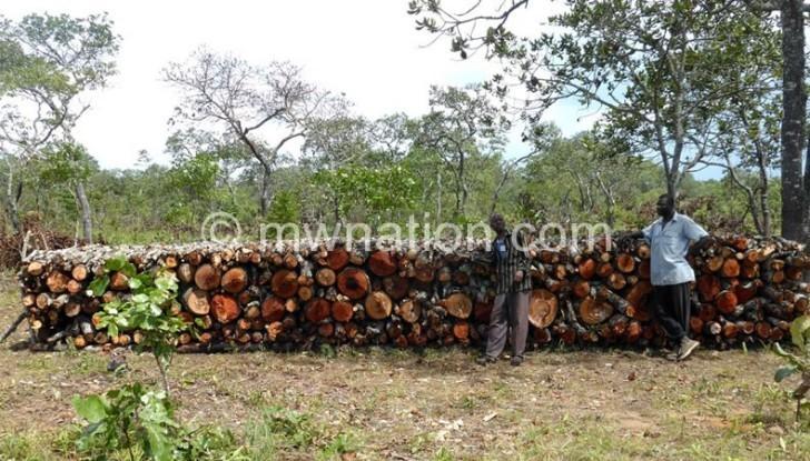Dzalanyama deforestation e1444224423621 | The Nation Online