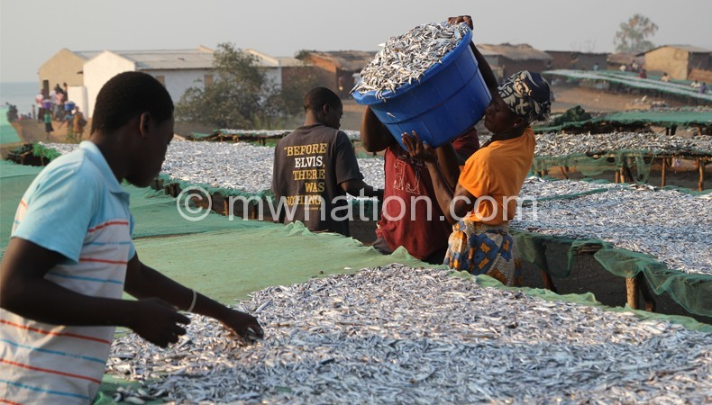 Experts are calling for better fish management in Malawi