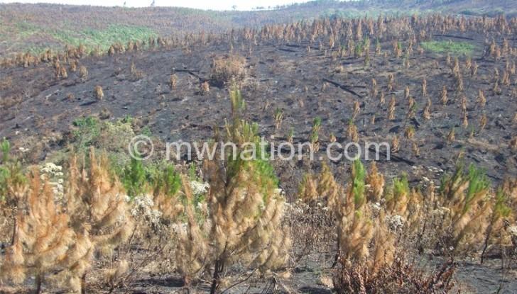 Tree burning deforestation e1445497591324 | The Nation Online