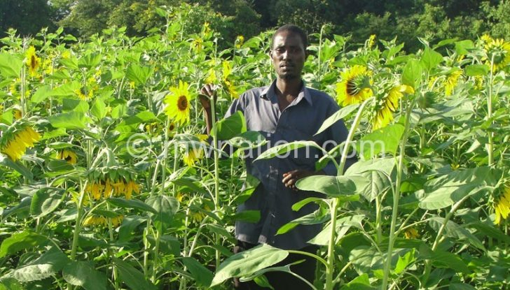 Farmers have the opportunity to sell sunflower on the global market
