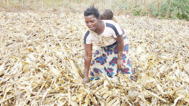 Adoption  rate of conservation agriculture still low