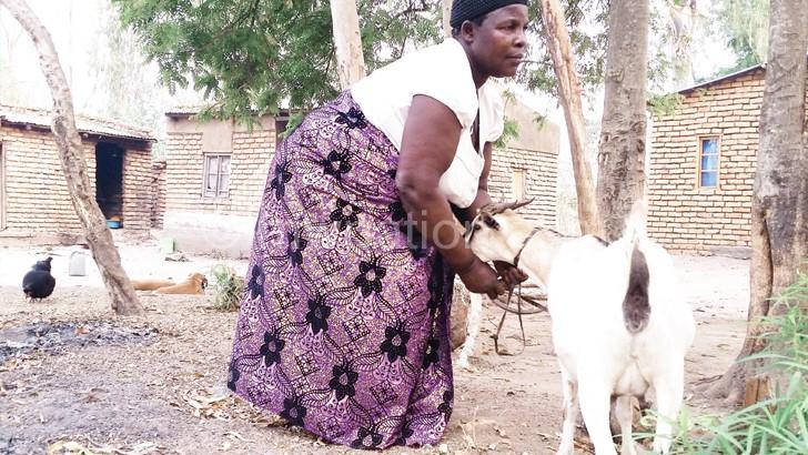 Makono now owns goats