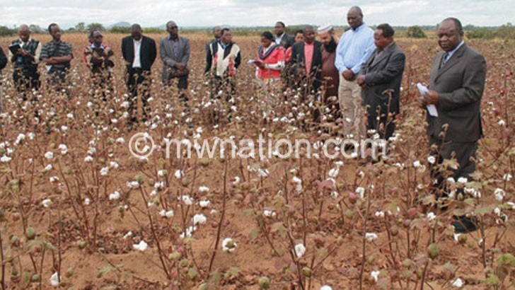 Cotton sector players appreciate Bt cotton