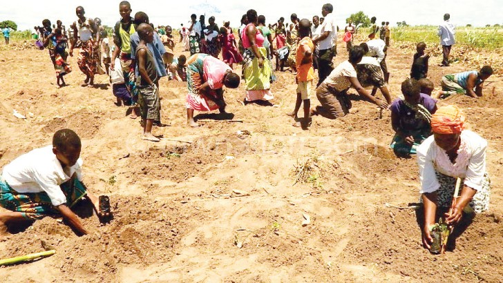 Chitipa communities are being encouraged to plant trees, like this