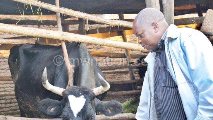 Mbwana kudyetsa ngombe zake zizipereka nkaka wochuluka