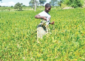Soya beans has been selected for the initiative
