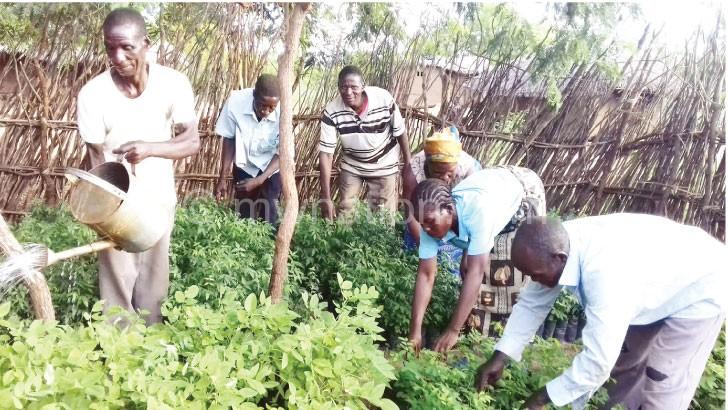 Community members attend to tree seedlings in Nsanje
