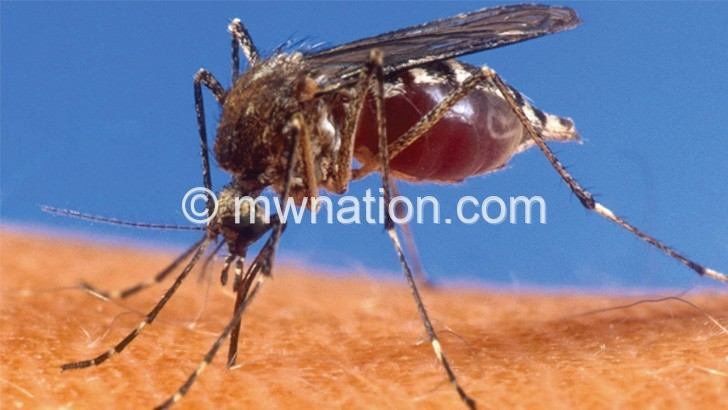 mosquitoe   The Nation Online