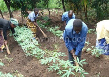Most farmers still use hoes despite huge investments into the sector