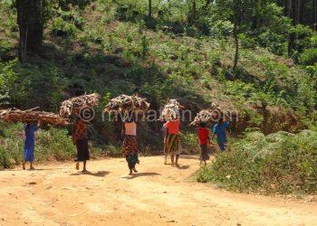 A women returns from fetching firewood