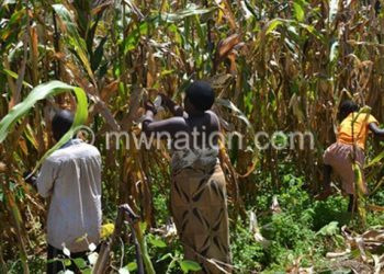 Farmers may not yield much harvest this season