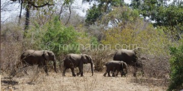 Malawi has stepped up efforts to combat wildlife crimes which included  poaching and smuggling of illegal wildlife products