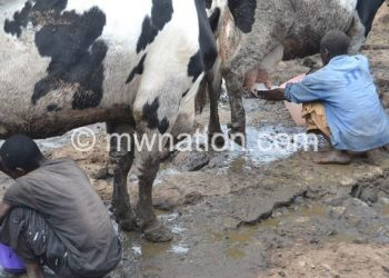 Milk per capita consumption in  Malawi is still low