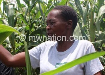 maize farmer | The Nation Online
