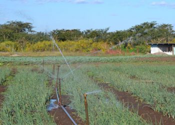 Irrigation has the potential to transform the country's agriculture sector