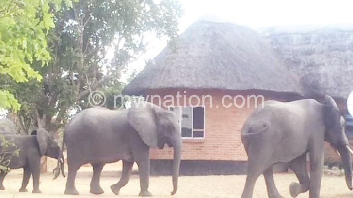 elephants | The Nation Online