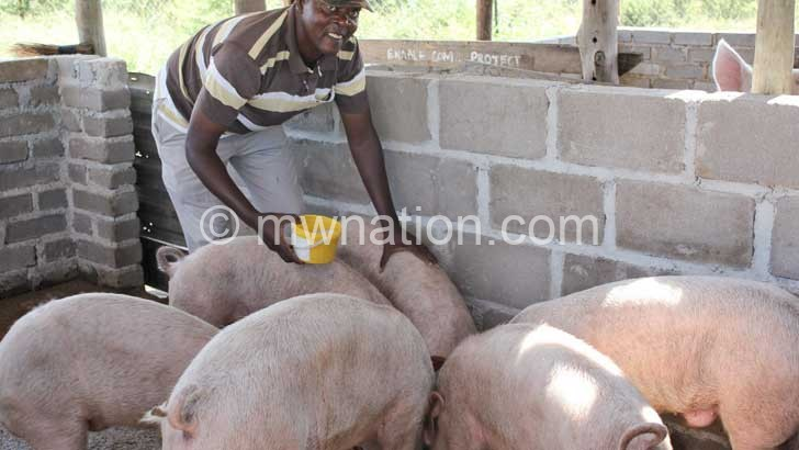 Nkhumba pigs | The Nation Online