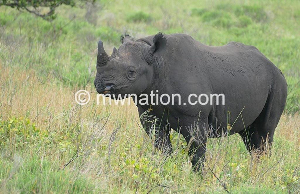 Rhino | The Nation Online