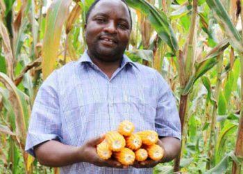 kaonga   The Nation Online
