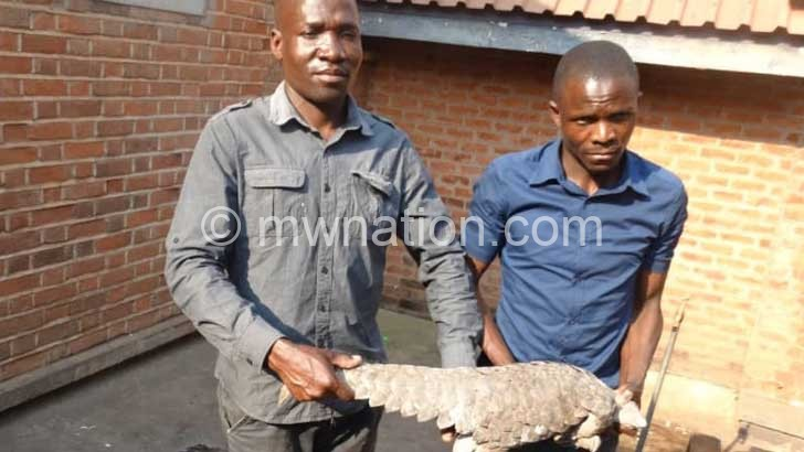Pangolin   The Nation Online