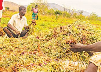farmer | The Nation Online
