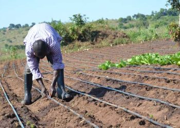Agriculture is touted as the economic backbone of the country