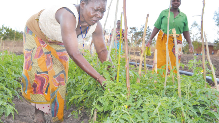 farmer 1 | The Nation Online