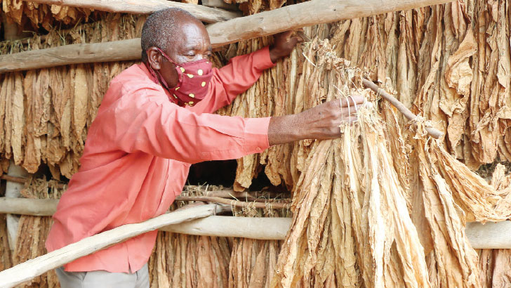 tobacco | The Nation Online