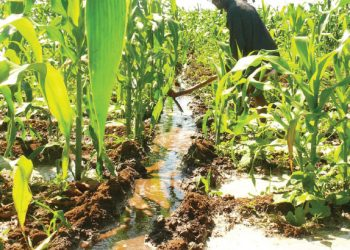 irrigation | The Nation Online