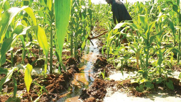 irrigation | The Nation Online