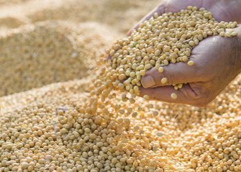 Farmer prepares soya beans for the market